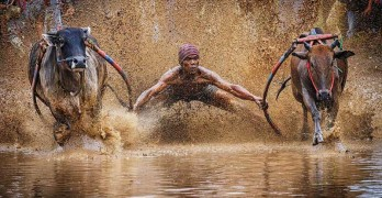 Yh Lee 2016-national-geographic-nature-photographer-of-the-year